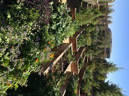 Rock Gardens Green Bay by The World Of Kale Bay Meadows San Mateo