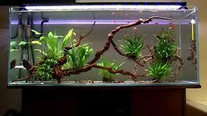aquarium decoration ideas freshwater bathroom fish tank aquarium decorating ideas natural decoration