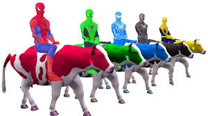 colors spiderman riding cow colours cartoon for kids learn