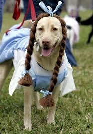 Funny Halloween Costumes Dogs 25 Dog Costumes Ideas Dog Halloween