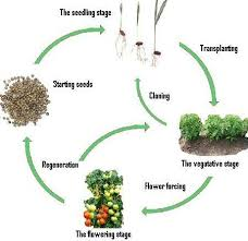 Life Cycle Of A Flowering Plant - lesson plan of life cycle of flowering plant general science grade
