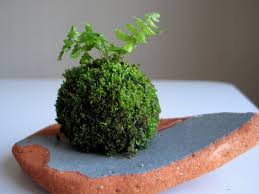 how to make a moss ball emmymade youtube
