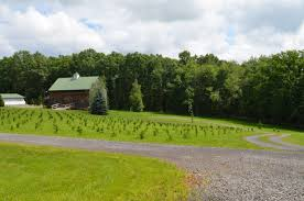 about the farm woodlake tree farm the best selection of