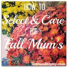 care fall mums hometalk