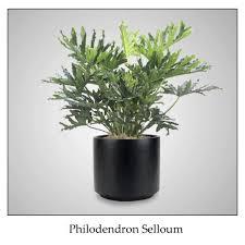 low light indoor plants low light interior plantscapes