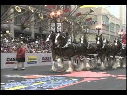 best 25 chicago thanksgiving parade ideas on chicago