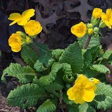 10 Best Perennials And Flowers by 10 Perennial Flowers You Can Start From Seed 10 Starting From