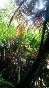 Cateracterum Palm by Best 25 Cat Tien National Park Ideas On Pinterest Vietnam