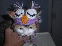 crocheted owl hat for cat owl hat for dog bird cat hat bird
