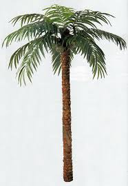 all about props palm trees for rent as props