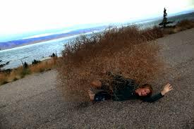 Tumbleweed When Tumbleweed Attacks Motherboard