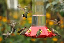 how to attract birds to your bird feeder u2013 unique bird feeder