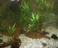 Aquarium Decorations Cheap Cheap Artificial Aquarium Plants 6 Steps