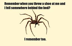 Friendly Spider Memes Image Memes - itt misunderstood spider meme page 2 bodybuilding com forums