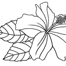 hibiscus coloring page 100 images hibiscus umbrella for bird