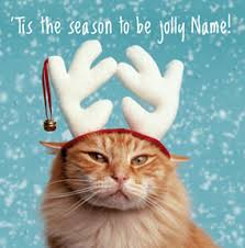 cat christmas cards cute u0026 funny funky pigeon