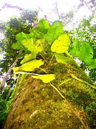 pachacamac earth gardens peru transmedia u003e u003e u003e shamans