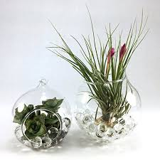 glass hanging plant terrarium with water balls u2013 2 pack u2013 pot