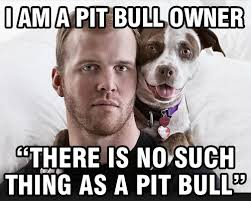 Pitbull Meme - who can identify a pit bull a dog owner of ordinary intelligence