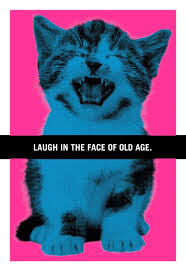 hissing kitten funny birthday card greeting cards hallmark