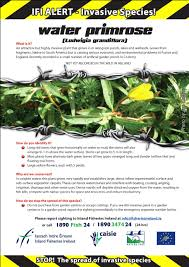 plants native to ireland sstrai guidance documents u2013 salmon