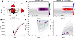 focal local field potential signature of the single axon
