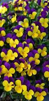 Beautiful Flower Pictures 19518 Best Beautiful Flowers U0026 Flutterbys Images On Pinterest