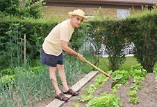 backyard vegetable garden eartheasy com solutions for