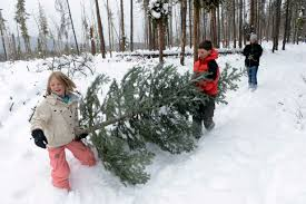 u s forest service allows christmas tree cutting west of front