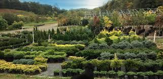 pisgah plants u2013 wholesale nursery for ornamental and edible plants