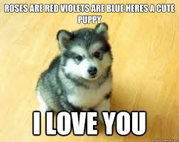 Cute Love Meme - roses are red violets are blue heres a cute puppy i love you