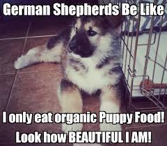 Funny German Shepherd Memes - 20 cute and funny german shepherd memes love brainy quote