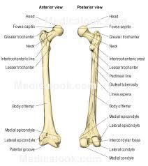 Anatomy Of The Human Body Bones Human Body Parts Bones Part Of The Human Bone Human Body Bone