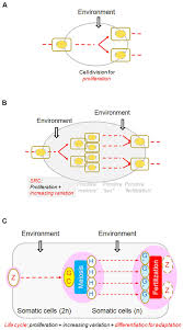 frontiers the concept of the sexual reproduction cycle and its