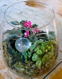 glass bowl terrariums the gardener u0027s eden