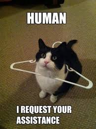 Animal Meme - human i request your assistance funny animal meme cute pet