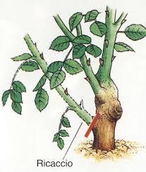 cura giardino come potare le cura delle cura delle piante
