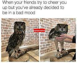 Owl Memes - owl memes best collection of funny owl pictures