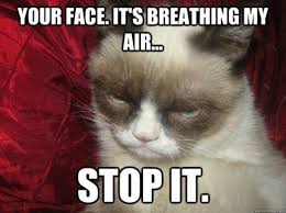 Grumpy Kitty Meme - top 10 funniest summer grumpy cat memes into the wild screen printing