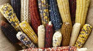which food plant was native to the old world native seeds search home