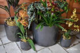 Design For Indoor Flowering Plants Ideas Indoor Outdoor Planting Ideas Time With Thea