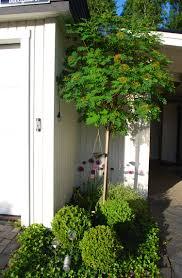 modele jardin contemporain aménagement petit jardin u2013 des conseils astucieux pour le réussir