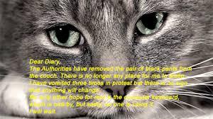 Sad Animal Memes - sad cat diaries album on imgur
