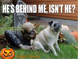 Happy Halloween Meme - happy halloween from rehab plus check out these funny and freaky
