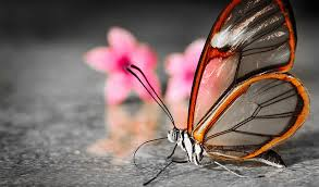 the glasswing butterfly the ark in space