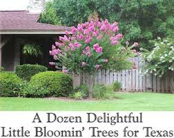 a dozen delightful bloomin trees for
