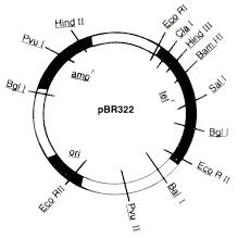 wilsonsbi4u 01 2014 unit 3 molecular genetics