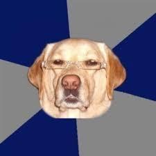 Annoyed Dog Meme - this guy should use my favorite meme quot annoyed looking dog