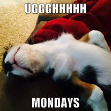 Mondays Meme - mondays meme cavalier king charles spaniel follow us on instagram