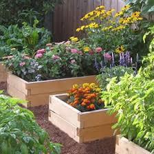 Cedar Raised Garden Bed Natural Cedar Raised Garden Bed 2 U0027 Widths Eartheasy Com